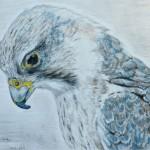 "Saker falcon drawing by ""S.T."""