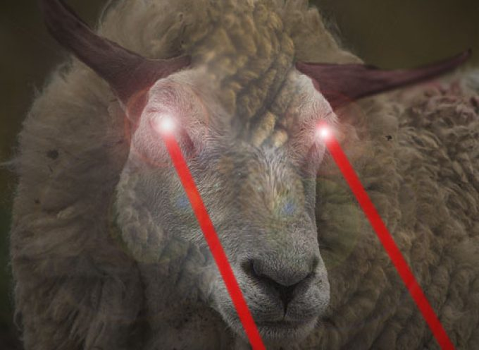Pecore Furibonde