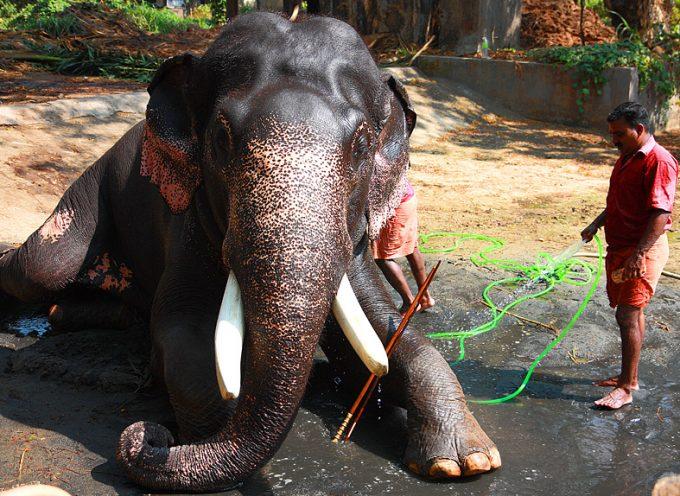 Come abbattere l'elefante nella stanza