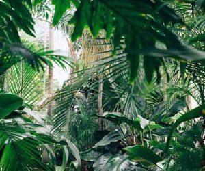 Benvenuti nella giungla