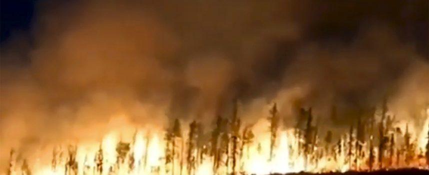 Cambiamento climatico in Siberia: animali fuggono dalla taiga in un'enorme tragedia faunistica