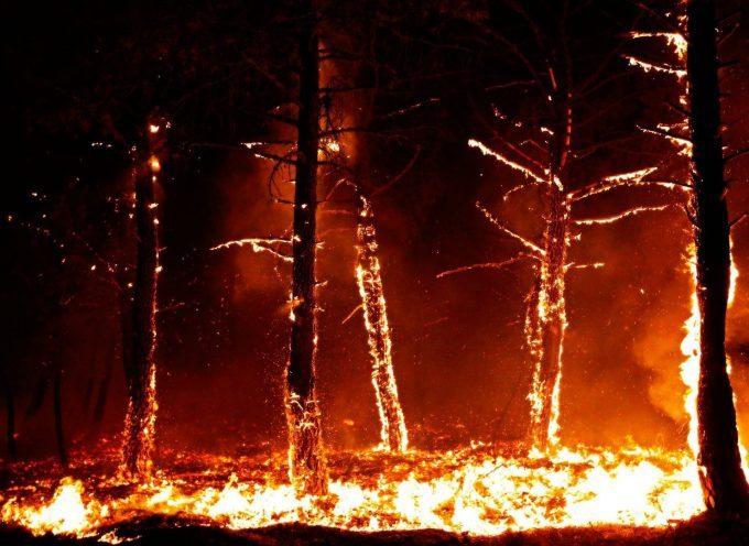 C'è una foresta scura e pericolosa dietro questi alberi che bruciano…